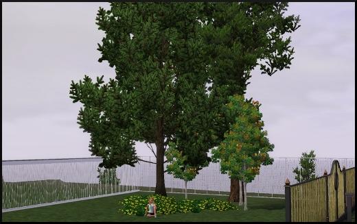 acces vip mode achat construction cas portail cloture arbre buisson