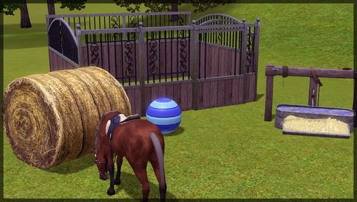 chevaux6
