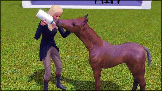 chevaux27