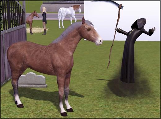 chevaux28