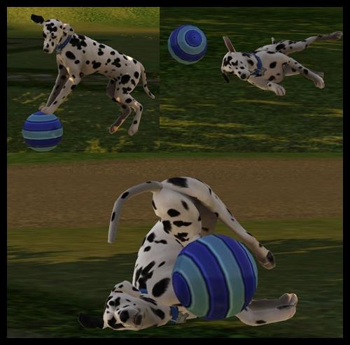 chien_ballon