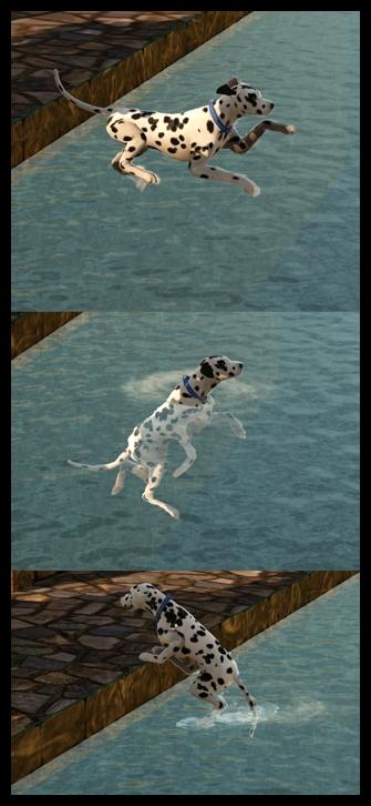 chien_piscine