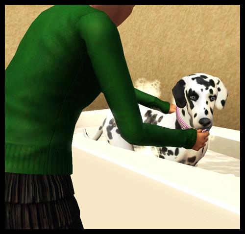 chien_bain