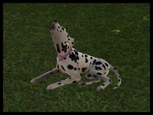 chien_naissance