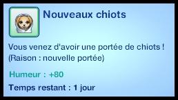 nouveaux_chiots