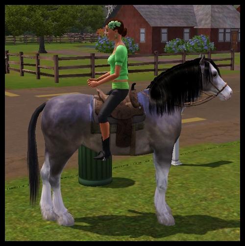 equitation2