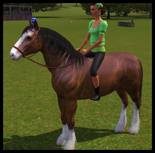 equitation6