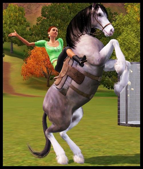 equitation8