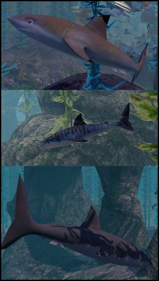 plongée et requins