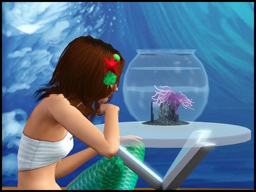 Aquarium et sirène