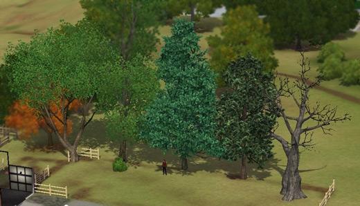 superpouvoirs arbres