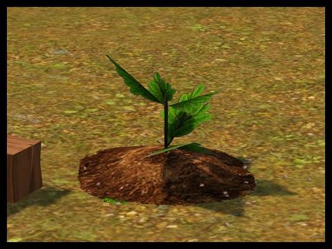 Sims 3 Université Végésims redevenir plante