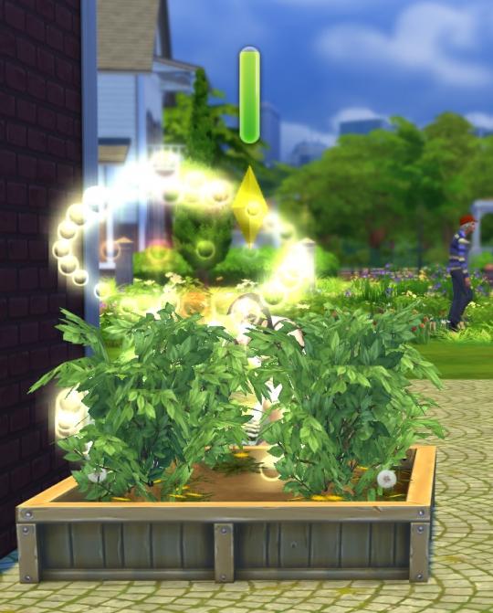 augmentation du niveau des plantes