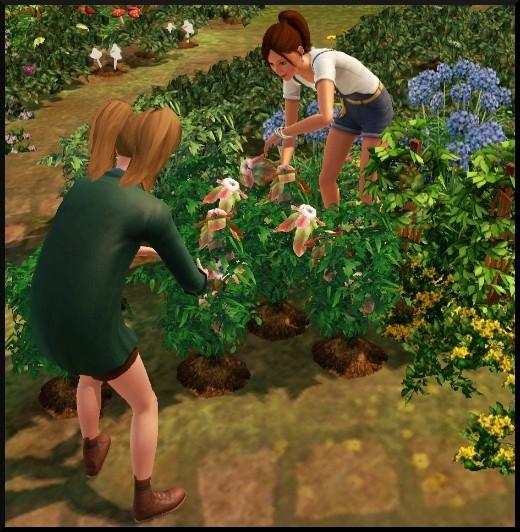 1 sims 3 competence jardinage introduction Nat Bloup jardin plante