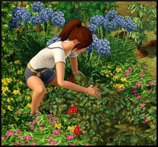 6 sims 3 competence jardinage Nat récolte ramasse fruits légumes