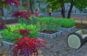 Jardins - Arbustes