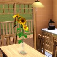 Cuisine espace repas