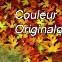feuille d'automne version s2 2