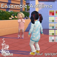 Anthime coloris 2