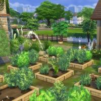 Campanule Jardin potager